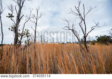 Spindly Dead Trees In Dramatic Expansive Wetland,