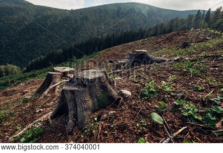 Stumps Field As A Result Of Clearcutting Process In Forestry Industry In Slovak Republic. Save Natur