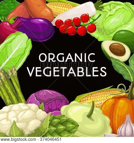 Farm Vegetables Food Vector Frame. Broccoli And Cauliflower, Yam And Eggplant, Cherry Tomato, Salad