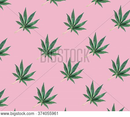 Pattern Of Green Cannabis Leaves On A Pink Background. Cbd Pattern