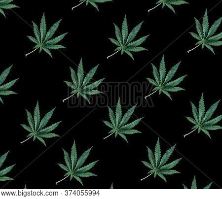 Pattern Of Green Cannabis Leaves On A Black Background. Cbd Pattern