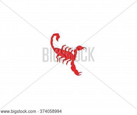 Scorpion Icon And Symbol Vector Illustration
