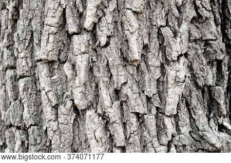 Relief Texture Of Tree Bark. Natural Background