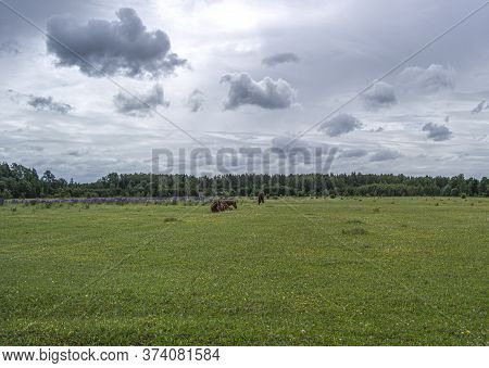Lying Dark Brown Horse On Grass.horse Photography, Equine Have A Rest