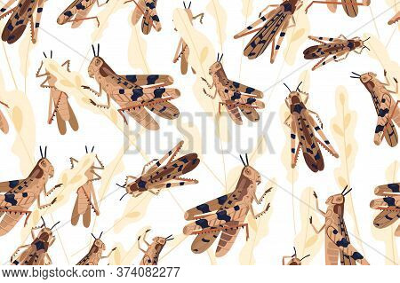 Swarm Of Locusts Attacking Rice Crop Seamless Pattern. Grasshoppers On Ripe Seed Head Vector Illustr