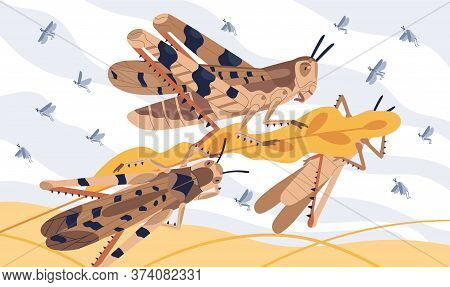Invasion Pest Of Rice Seed Vector Illustration. Large Herbivorous Insects Attack On Field Or Meadow.