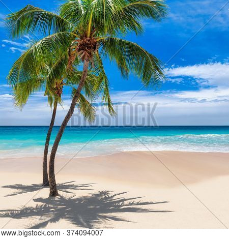 Tropical White Sand Beach With Coco Palms And The Turquoise Sea On Paradise Caribbean Island.