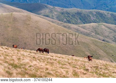 Landscape With Wild Horses In Nature. Amazing Nature Landscape. Close Up Of Wild Horses In Nature. H