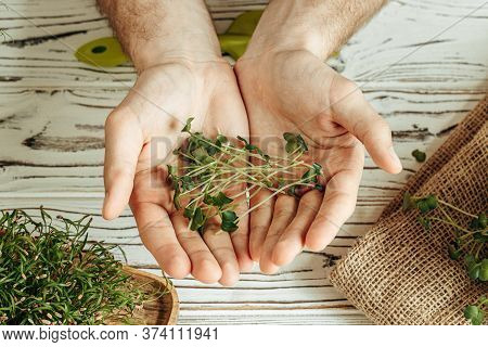 Male Hands Holding Micro Green Sprouts, Close Up