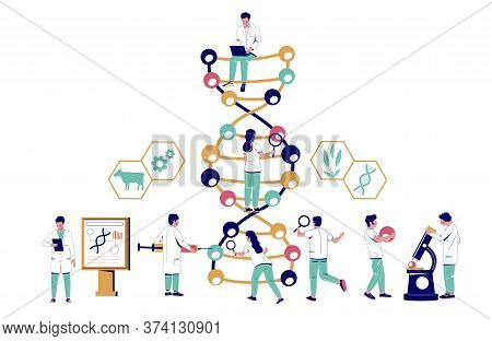 Scientists Studying Dna In Biotechnology Lab, Vector Flat Illustration