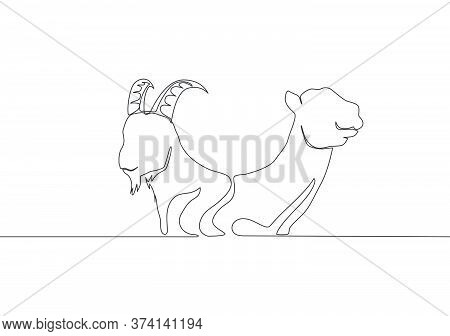 Single Continuous Line Drawing Of Goat And Camel Head. Muslim Holiday The Sacrifice An Animal Such A