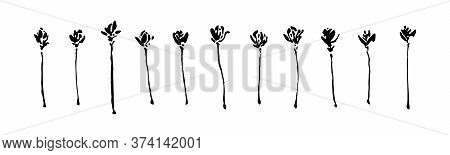 Set Of Hand Drawn Wild Flowers. Outline Wild Plants Ink Painting. Black Isolated Floral Sketch Vecto