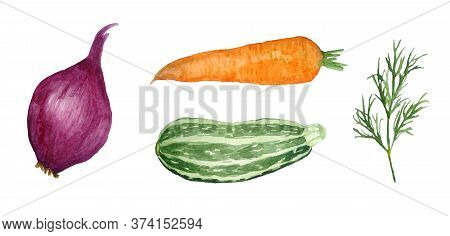 Watercolor Hand Drawn Set Of Vegetables Illustration. Orange Carrot, Red Onion, Dill Herb, Zucchini
