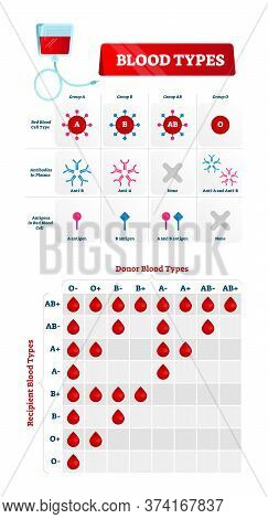 Blood Group Types Vector Illustration. Educational Labeled Nursing Chart. Red Blood Cell, Antibodies