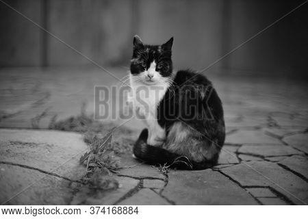 Cat Sitting On The Wild Stone Floor Outdoors. Bw Photo