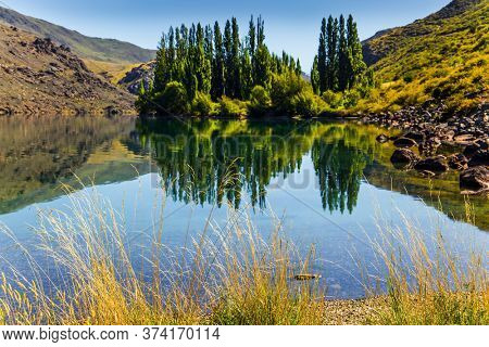 The beauty of the South Island. Cypress alley is reflected in the lake. New Zealand Southern Alps. Blue sky and light clouds. The concept of ecological and photo tourism