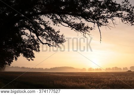 Sunrise field spring summer landscape sun morning sunset Nature background tree Nature background country rural Nature background mist fog Nature background Nature background Nature background countryside Nature background dawn trees Nature background.
