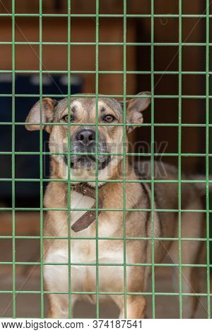 Non-breeding Dogs In A Cage In A Shelter.