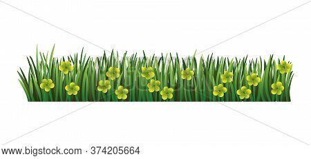Green Grass Border. Fresh Green Floral Grass. Isolated On Transparent Background. Vector Illustratio