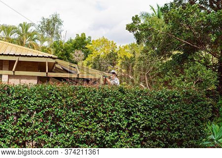 Townsville, Queensland, Australia - June 2020: Man Standing On Trestles Behind Hedge Sanding Roof Ra