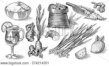 Ginger Root, Chopped Rhizome, Fresh Plant, Bag And Tea In Glass Cup. Vector Engraved Hand Drawn Sket