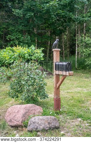 Black Postbox With Crow Near The Road