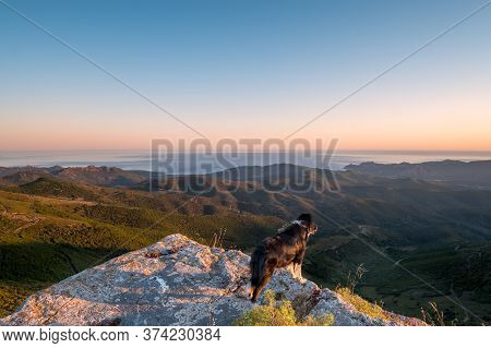 A Border Collie Dog Enjoying The View Of The Coastline And The Mediterranean Sea At Sunrise From A R