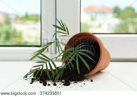 Overturned Terracotta Flower Pot With Soil And Plant On White Windowsill Indoors