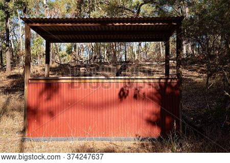 An Old Tin Hut In The Bush Used For Serving Guests Drinks At An Australian Outback Tourist Resort In