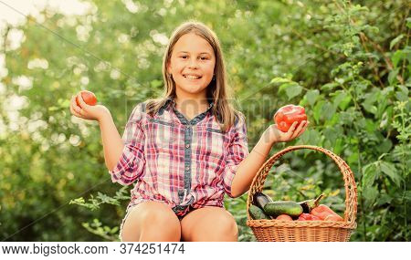 Eat Healthy. Summer Harvest Concept. Organic Harvest. Healthy Lifestyle. Kid Gathering Vegetables Na
