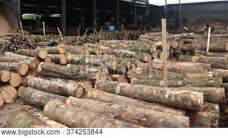 Logs piled up at lumber factory