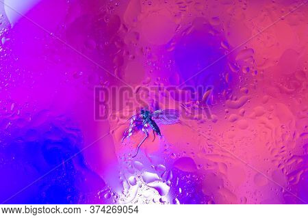 The Purple Abstract Composition With Oil
