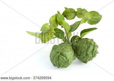 Whole Bergamot, Kaffir Lime, Leech Lime Or Mauritius Papeda With Leaf Is A Vegetable And Herb Of Tha