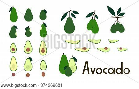 Fruit. Avocado Whole And Cut. Avocado Pit. Avocado Half And Slices. Avocado Tree Branches With Leave
