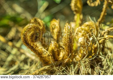 Ferns In The Forest. Beautiful Ferns Leaves Green Toned Foliage. Close Up Of Ferns In The Forest. Na