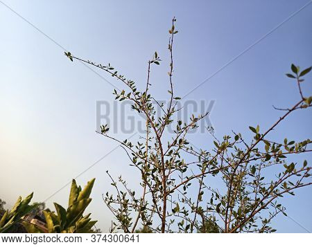 A Thorny Plant With Sky In The Background