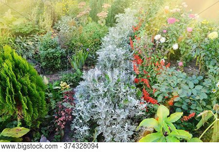 Autumn Garden With Flowerbed And Colorful Plants