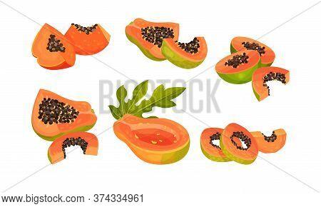 Papaya Fruit Cross Section Showing Orange Flesh And Numerous Black Seeds Vector Set