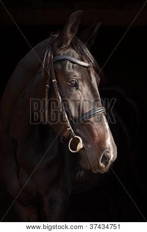Bay horse portrait in dark stable