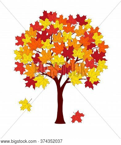 Cartoon Maple Tree With Autumn Leaves Isolated On The White Background. Colorful Vector Illustration