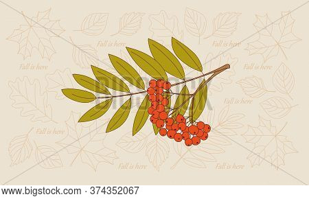 Rowanberry Twigs And Contour Drawing Autumn Leaves Of Maple And Oak Backdrop. Vector Illustration Te