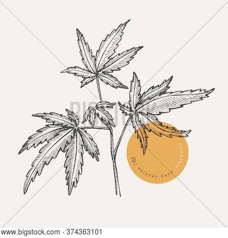 Hand-drawn Cannabis Branch On A Light Isolated Background. Medicinal Plant. Marijuana Leaves For The