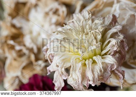 Wilt flower bouquet close up