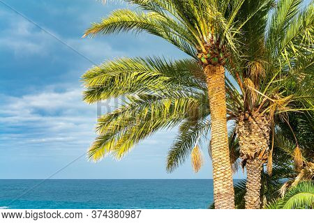 Beautiful Green Palm Trees Against The Blue Sunny Sky With Light Clouds And Ocean On Background. Tro