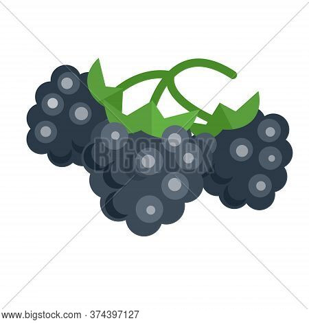 Branch Mulberry With Leaf. Isolated On White Background. Vector Flat Color Icon.