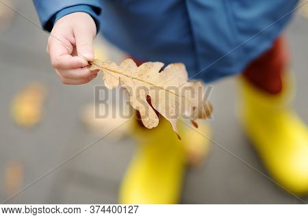 Little Child Explore A Drops Of Water On Fallen Oak Leaf. Kid Exploring Nature. Autumn Activity For