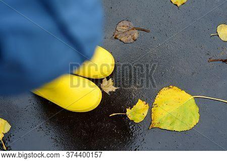 Preschooler Boy Wearing Yellow Rain Boots Walking In Autumn Park. Golden Fallen Leaves Lying On Wet