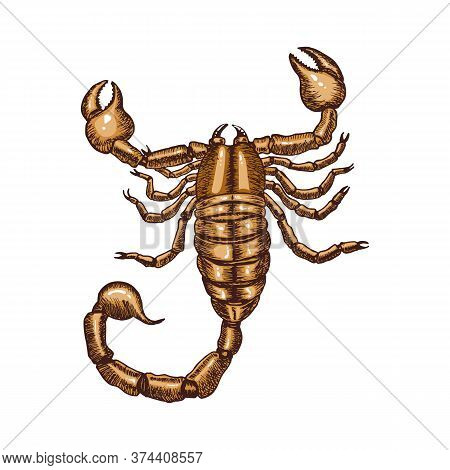Colored Scorpion Isolated On White Background. Hand Drawn Sketch In Vintage Engraving Style. Vector