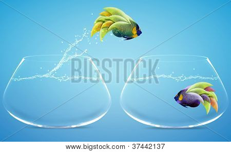 Angelfish Jumping To Other Bowl