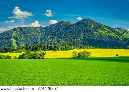 Spring Rural Landscape With Grassy Green Meadows And Rapeseed Fields. Rajec Valley In Slovakia, Euro